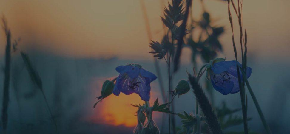 historia de las hierbas