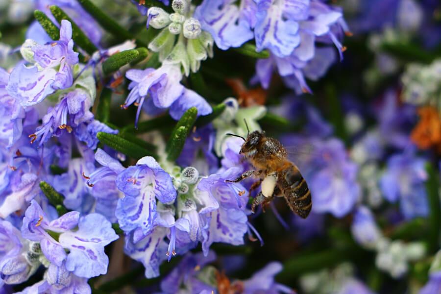miel-romero-natural-3.jpg